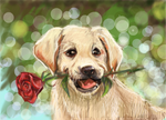 Romantic puppy