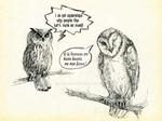 Why we love barn owls