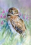 Owl in lavender