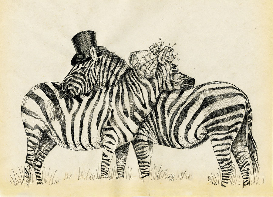 Fancy Zebras couple