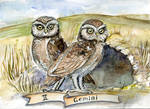 Gemini - II - Zodiac owls