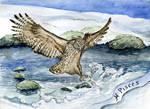 Blakiston's Fish Owl is for Pisces - Zodiac Owl