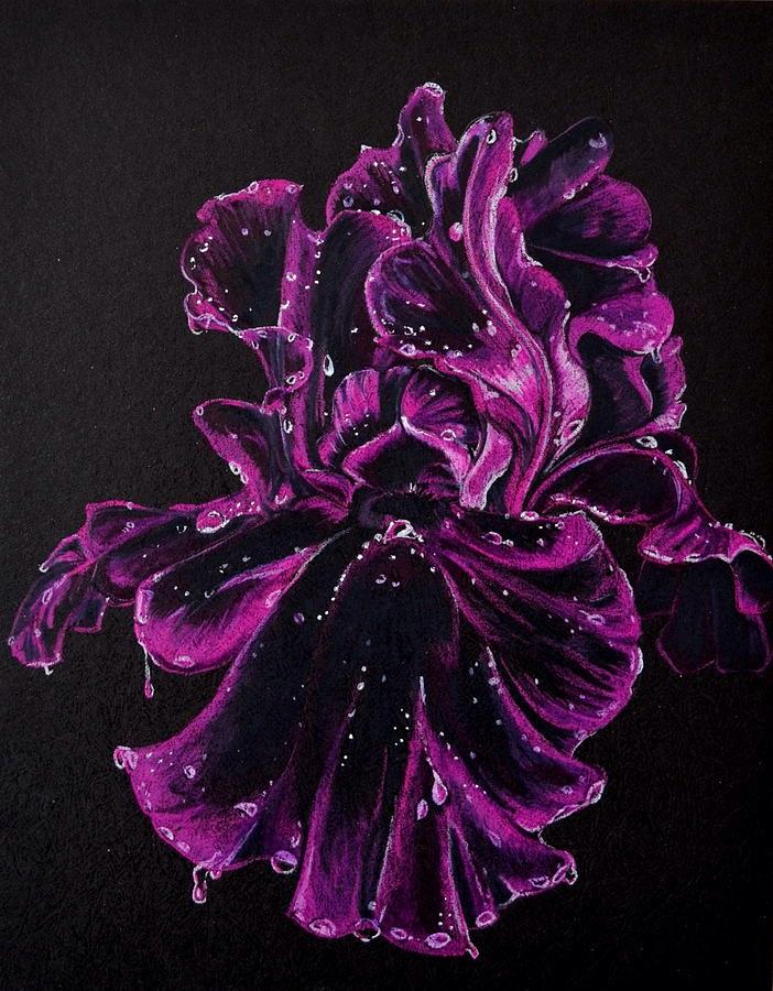 Black iris by Katiefiorito