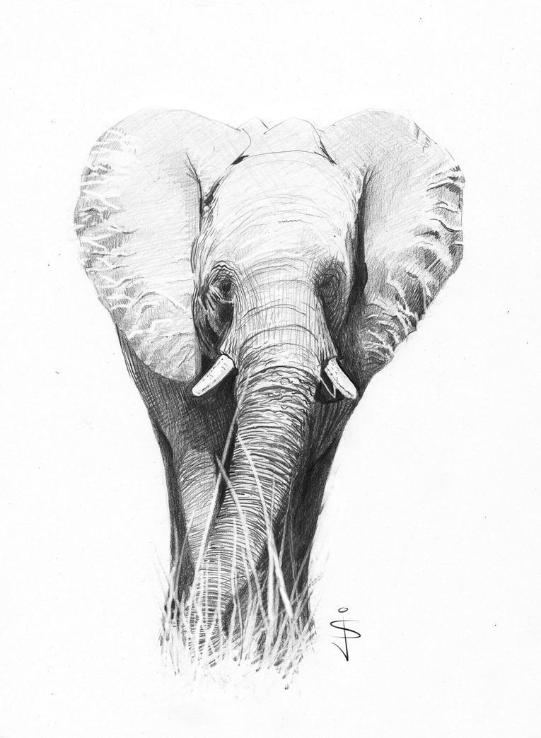 Pencil Drawings Of Elephants Tumblr Elephant - Rough Sketc...