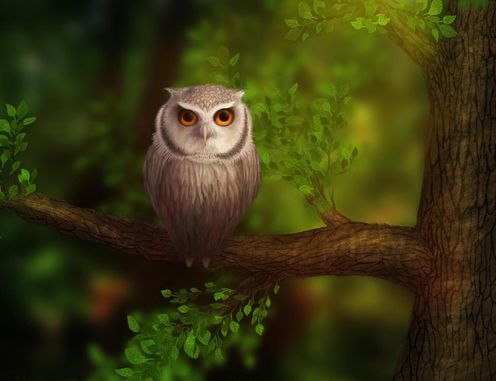 Little owl by Diflin