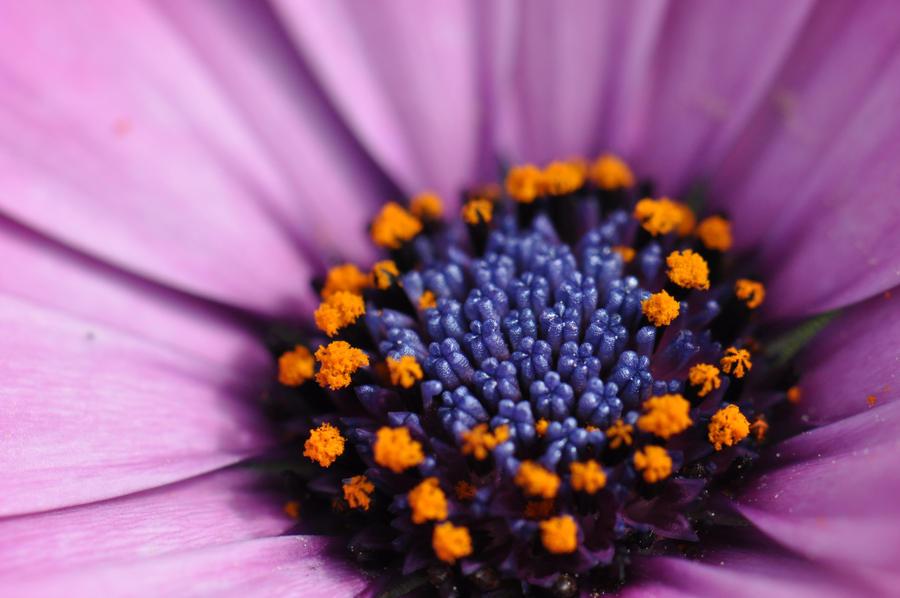 Flower VII by OrganizationZero