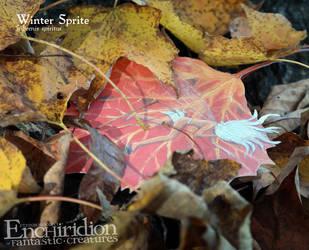 Winter Sprite (hibernis spiritus) by Ettinborough
