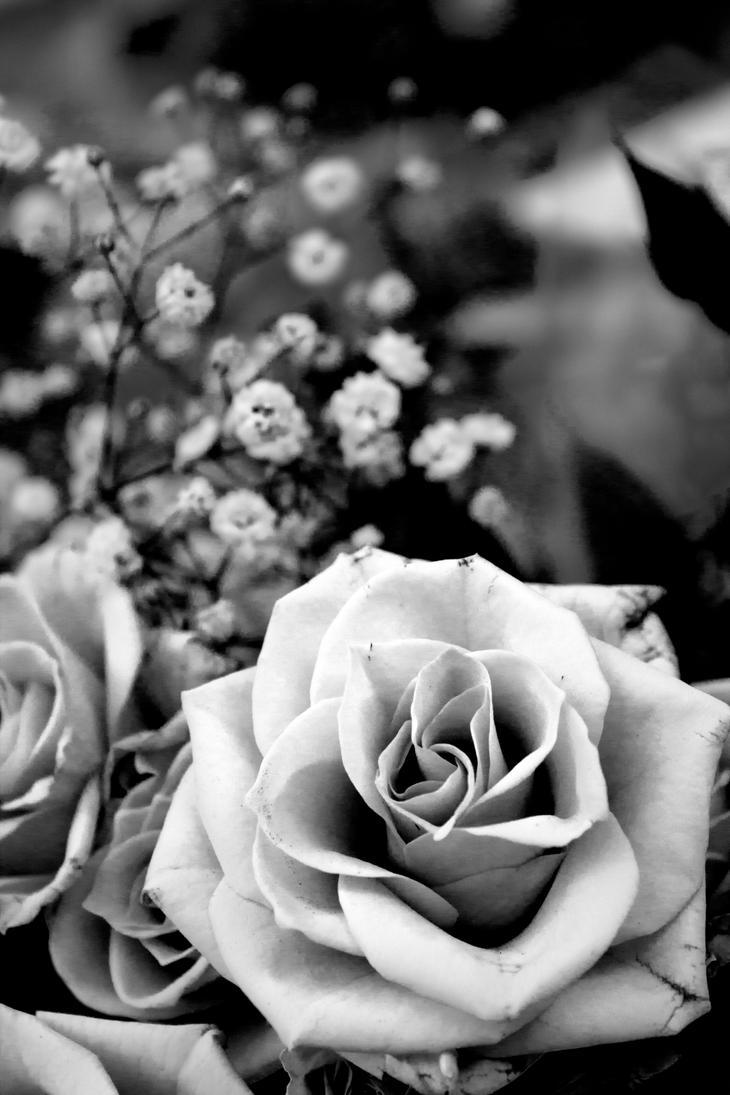 Black and white rose by billie birrell on deviantart