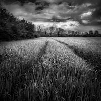 Centrifugal fields for ever by slygarde