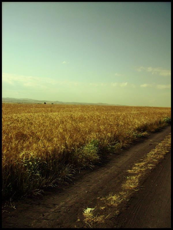 In the open fields by ofeliq