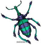 Eupholus schoenherrii Beetle