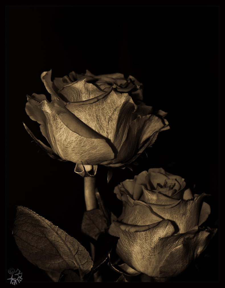 The Eternal Rose by XanaduPhotography