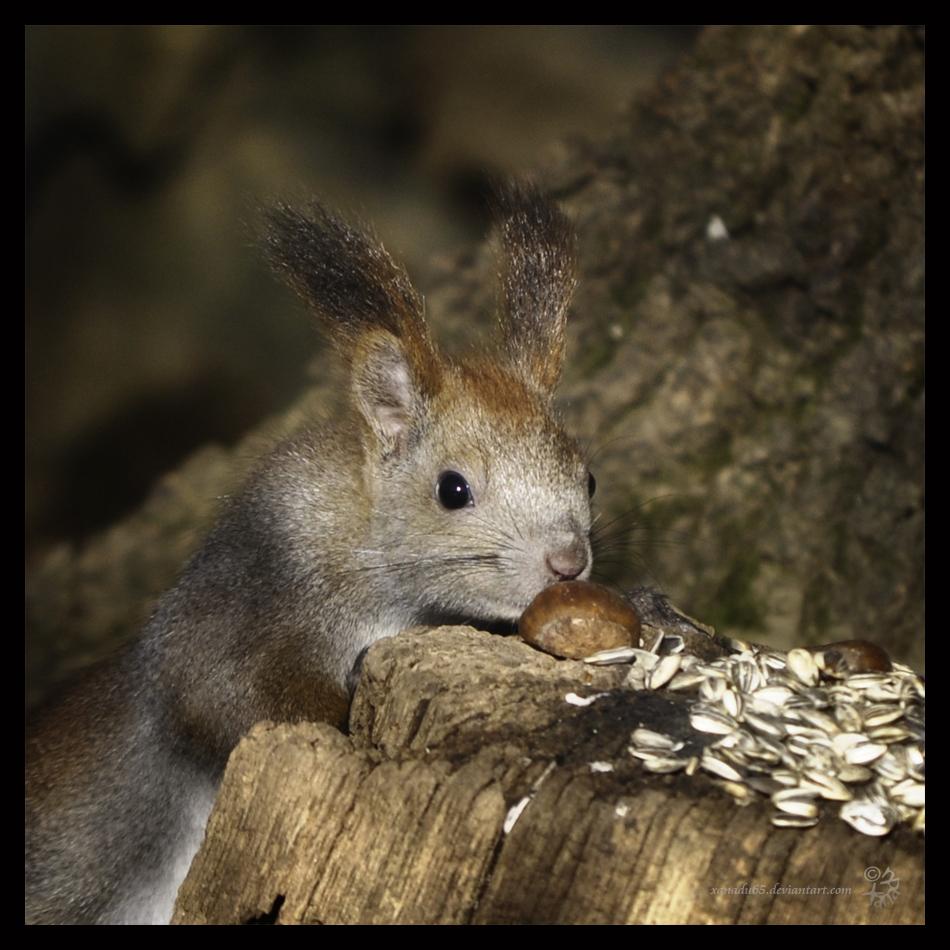 Yummy chestnut by XanaduPhotography