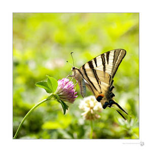 Swallowtail's Cocktail by XanaduPhotography