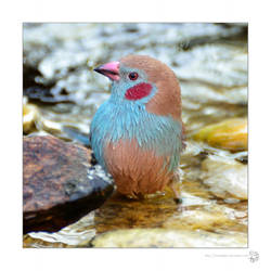 Afrikanische Vogelvoliere 1 by XanaduPhotography