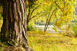 Bashful Autumn by XanaduPhotography