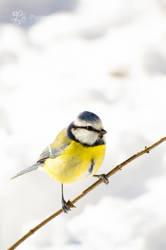 The Pleasures of Winter_1 by XanaduPhotography