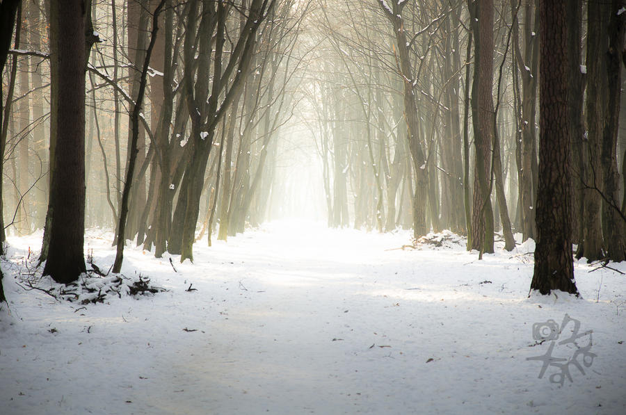 Walking between rays and winter mist by XanaduPhotography