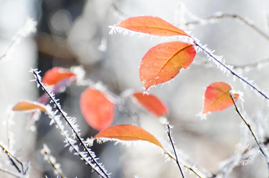 Season's Greetings by XanaduPhotography