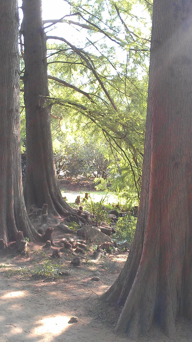 Faille Trees by faille