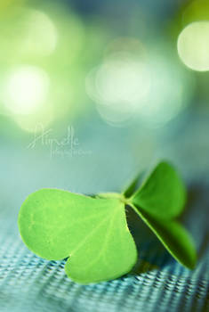 -:- green butterfly -:- by Aimelle