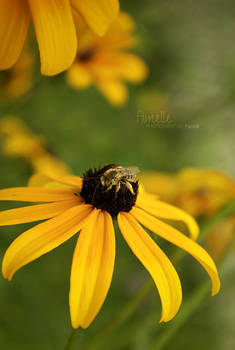 yellow attracts yellow