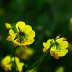 yellow duo by Aimelle