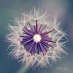 fluffy sun by Aimelle