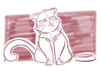 Confused Cat
