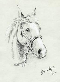 Horse Portrait on toned paper