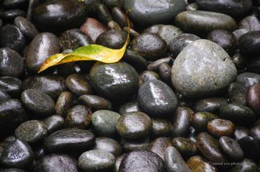 Leaf on Stones by narodski