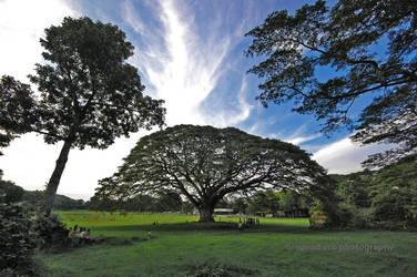 Fertility Tree by narodski