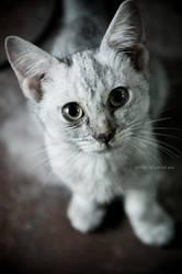 Ash the Cat by narodski