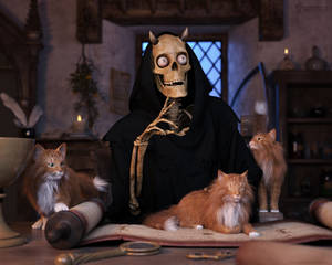 VA2019: Cats Are Nice