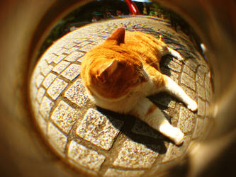 Fisheye Japan - Cat by Skybase