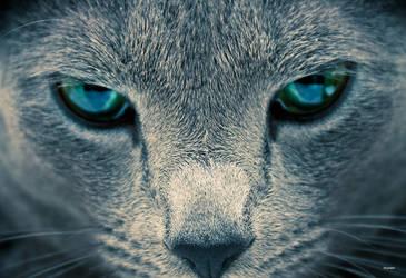 Eyes by Skybase