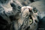 Meow Cat Meow