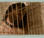 Caged deviant id