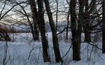 Sunlit Path in Winter Snow
