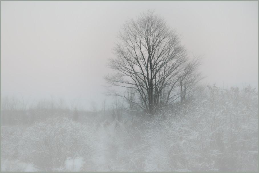 winter field by barefootliam