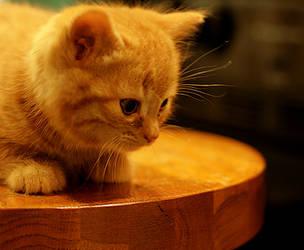 Rescue Kitten: Ball of Sunshine by barefootliam