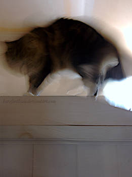 Cat: Closet with Arch