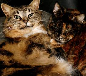 Malachi and Simmy