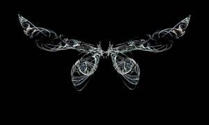 Fractal Stock - Fairy Wings II