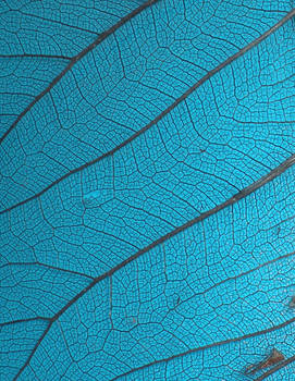Stock Texture - Leaf Veins III