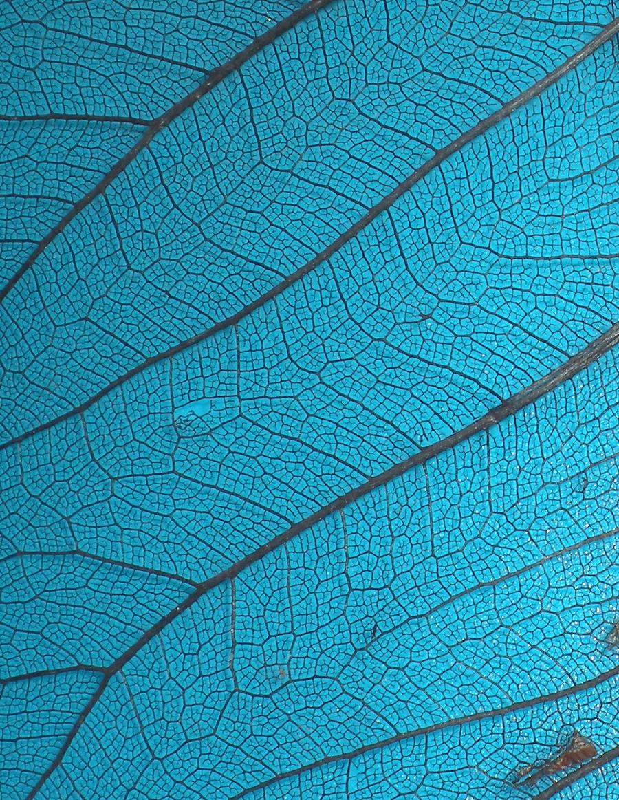 Stock Texture - Leaf Veins III