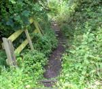 Stock - Overgrown Steps I