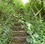 Stock - Overgrown Steps II