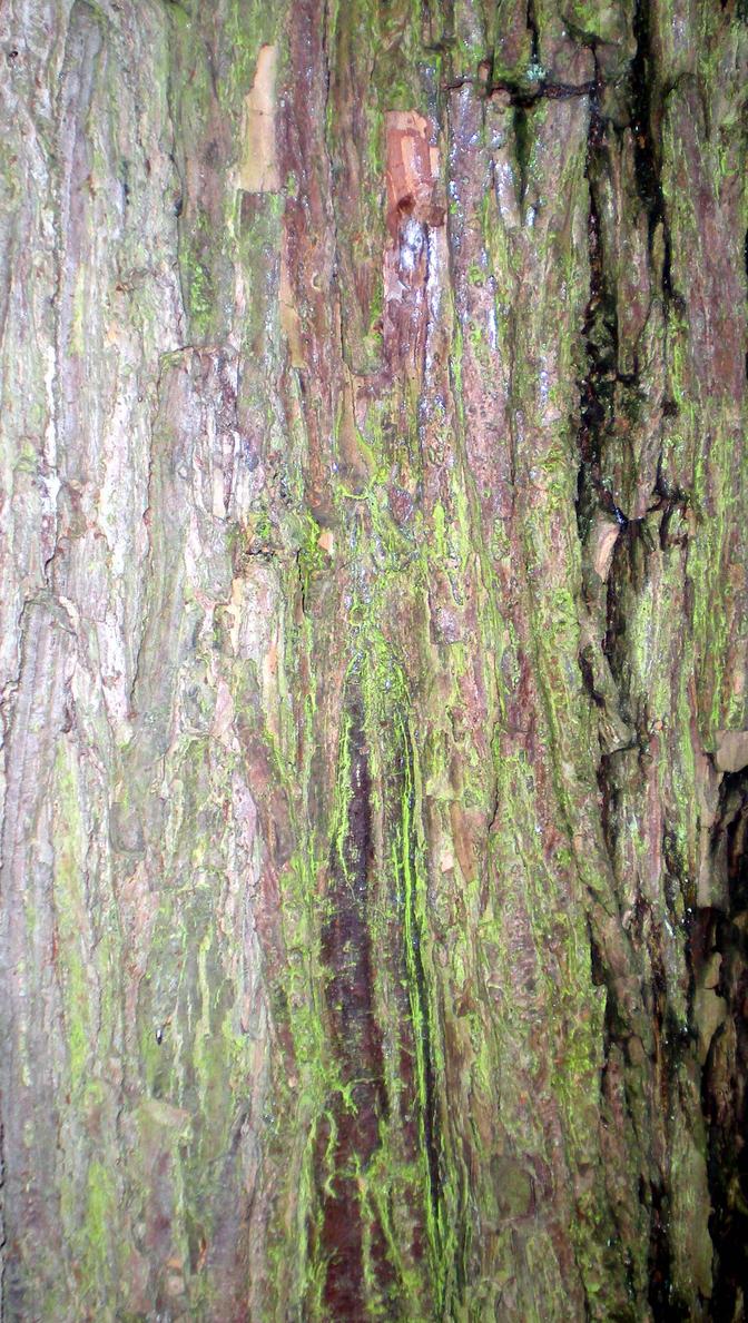 StockTexture -Tree Bark by rockgem
