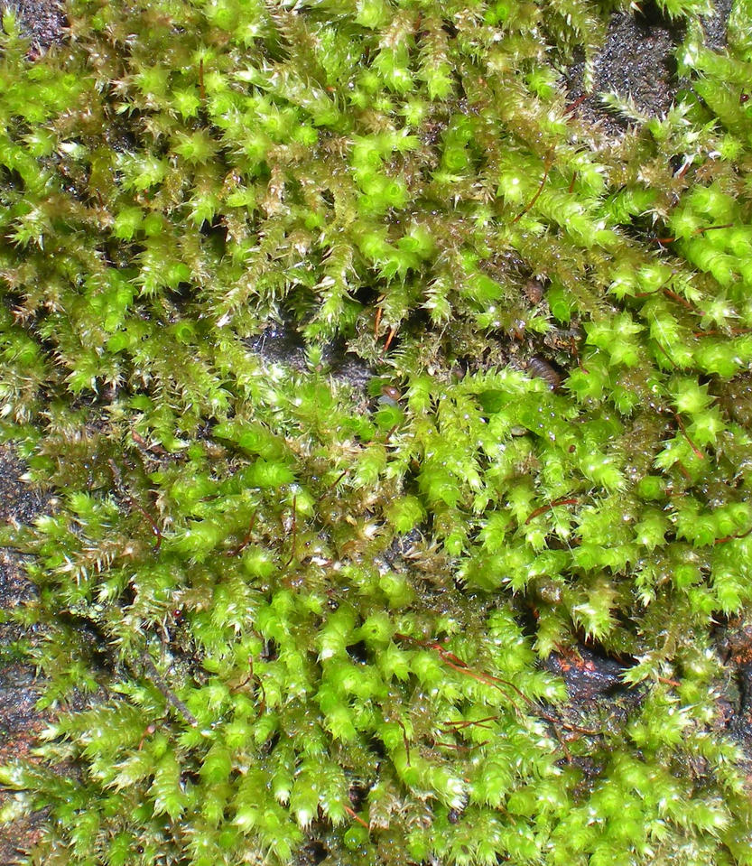 StockTexture - Moss by rockgem